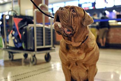 В Италии 49 наркоторговцев отдали под суд за перевозку кокаина в собаках