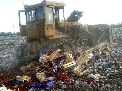 На Кучинском полигоне закопали две с половиной тонны сербских нектаринов
