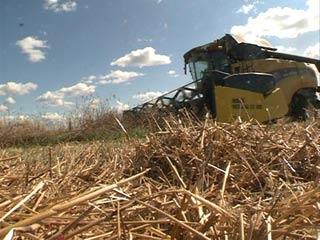 Смоленским аграриям выделят около 270 миллионов субсидий