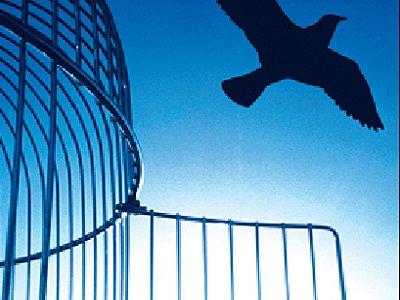 По экономической амнистии первой в регионе освободили бизнес-леди без лицензии