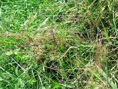 Бесхозяйственность привела к поражению огромных полей опасным сорняком