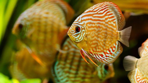 Выбираем правильный аквариум