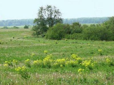 С подачи смоленского «ЕР» ужесточат наказание за неиспользование сельхозземель