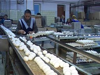 Цена на куриное яйцо в Смоленской области значительно выросла