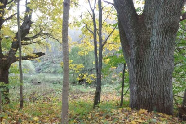 Деревья могут стать памятниками