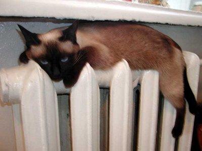 Власти пообещали не медлить с подачей тепла в «замерзающие» дома