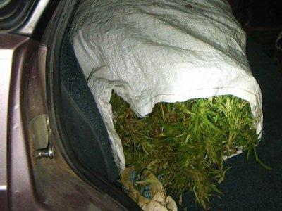 Юнцов, перевозивших марихуану, заподозрили в угоне машины