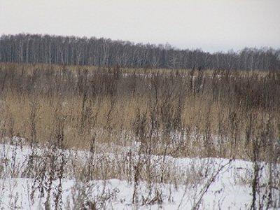 Шестерых смолян, не обрабатывающих свою землю, могут посадить