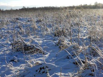 Руднянских землевладельцев наказали за выросшие на 240 гектарах сорняки