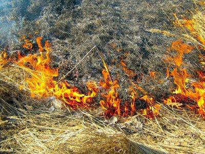 Пал сухой травы на Смоленщине стал стихийным бедствием