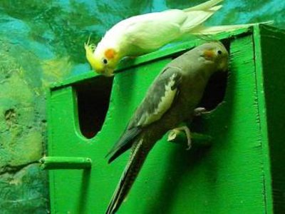 Попугаи в зоопарке образовали первую пару и ждут потомство