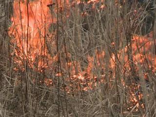 На Смоленщине из-за пала сухой травы возникает все больше пожаров