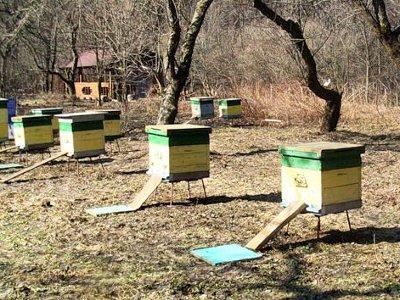 Пчеловод навел порядок на своей пасеке под давлением соседки, суда и приставов