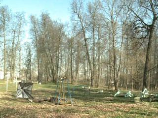 В Смоленском районе вырубили вековые липы под баскетбольную площадку