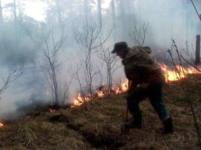 В Смоленском Поозерье из-за устроенного отдыхающими салюта загорелся лес