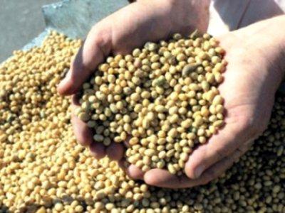 Свыше 130 тонн семян, ввезенных через наш регион, были некачественными