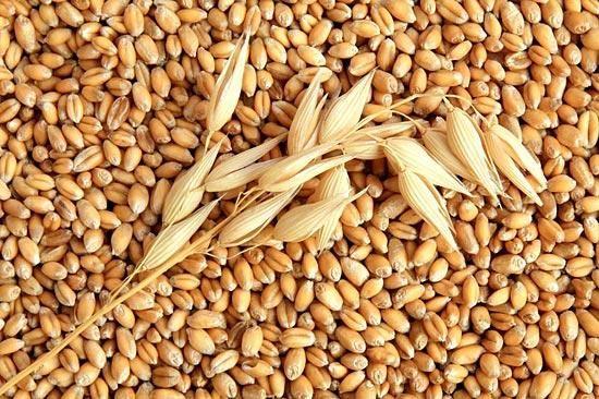 Зерновые культуры и их урожайность