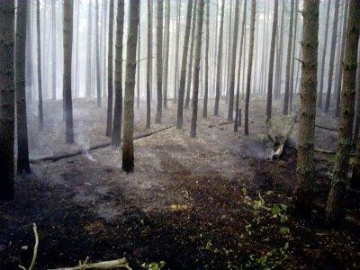 В регионе произошел первый лесной пожар