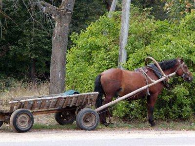 Лошадь с телегой вернулась домой без уехавшего на ней пасечника
