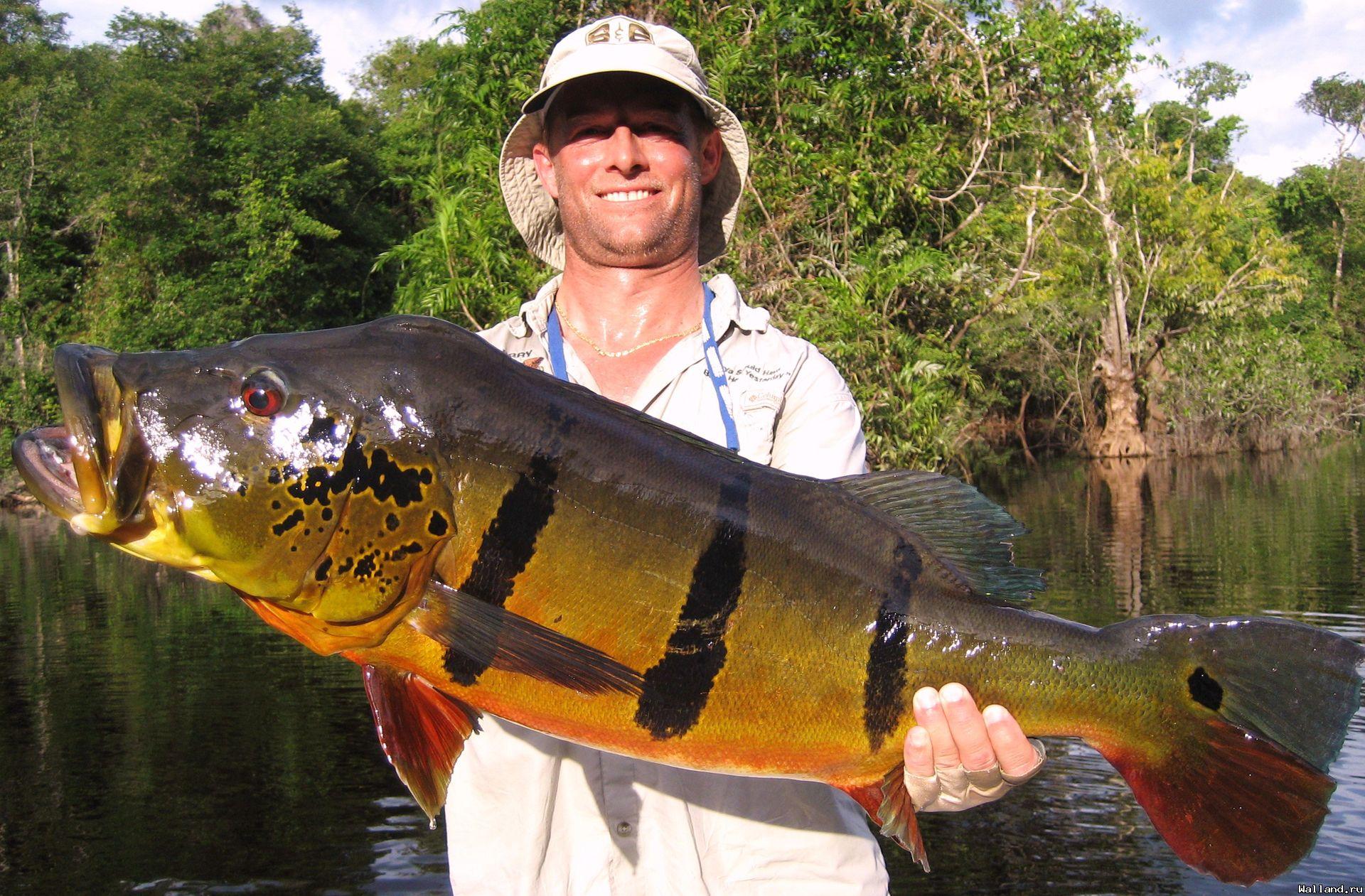 Рыбацкие большая рыба