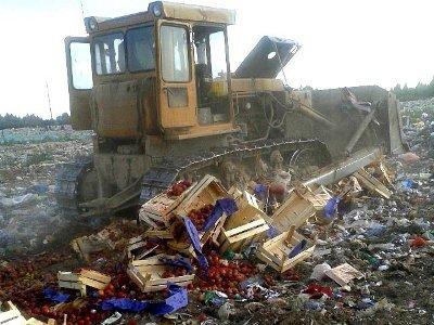 На Кучинском полигоне закопали привезенные из Европы персики с «живой» начинкой
