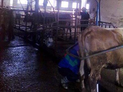 На ферме «Рутовечь» выпускали молоко в антисанитарных условиях