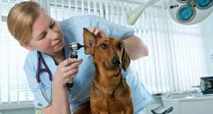 Ветеринарный центр «Вет-доверие» — помощь вашим животным на дому круглосуточно по самым доступным ценам