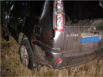 Столкновение на автодороге с лосем завершилось госпитализацией четырех человек