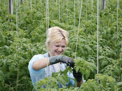 Подъемные для молодых аграриев увеличат втрое