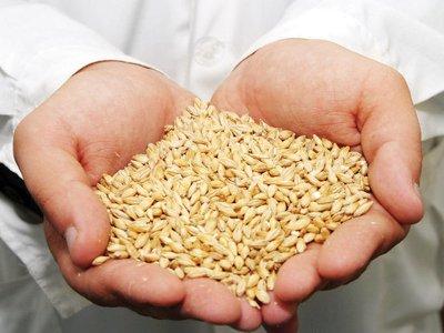 На Смоленщине запасы зерна снизились на 15 процентов