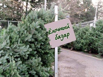 Елочных базаров в Смоленске станет меньше
