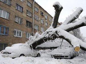 На Смоленщине прогнозируют аварийные ситуации из-за усиливающегося ветра