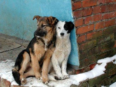 Возле «Современника» будут собирать средства ухода за бездомными животными