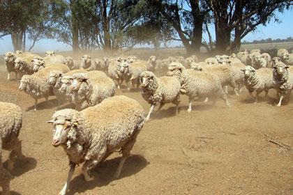 Австралийских экологов оштрафуют за съемки на фермах