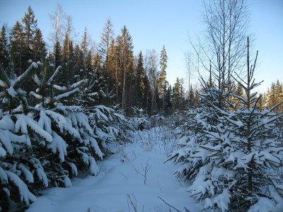 Ловить охотников за елками будут почти три десятка созданных патрульных групп
