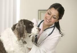 Ветеринарная клиника – крепкое здоровье домашнего животного