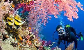 Яркий и незабываемый подводный мир
