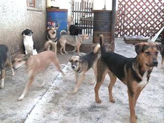 В Смоленске из-за нехватки денег остановлено строительство приюта для бездомных животных