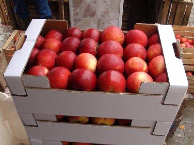 Прибывшие из Сербии яблоки оказались запрещенными польскими