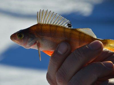 В озерах национального парка стала массово гибнуть рыба