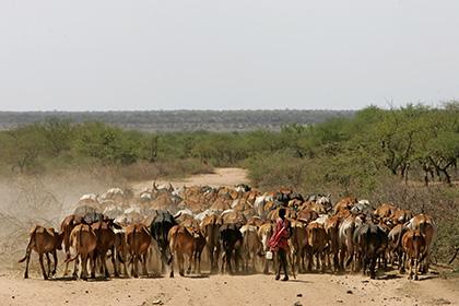 Похитители скота убили в Кении 45 человек