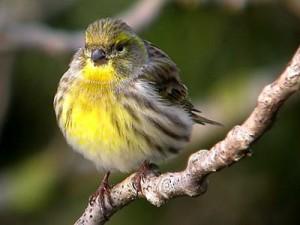 Фотоохотники в Поозерье запечатлели новый вид птиц