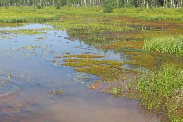 Возвращение Реадовского озера в Смоленске обойдется в два миллиона рублей