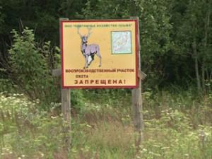 В Смоленской области увеличены площади общедоступных охотничьих угодий