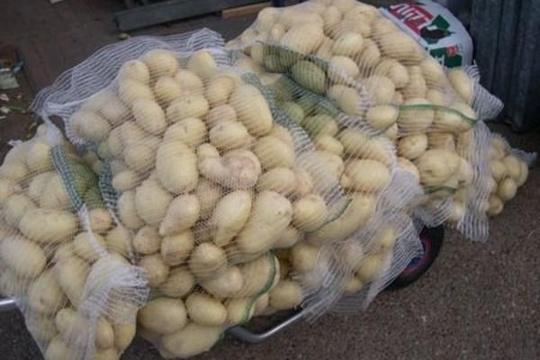 В Смоленскую область не пустили белорусскую картошку