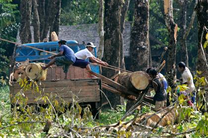 В Мьянме 150 китайских лесорубов приговорили к пожизненному