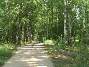 В Смоленске на территории лесопитомника будет разбит благоустроенный городской парк
