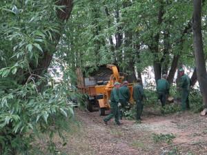 Власти начали работы на месте парка на Киселевке