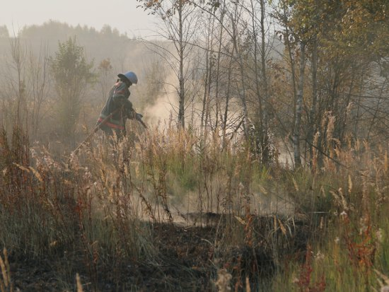 Гринпис обнаружил три торфяных пожара в области