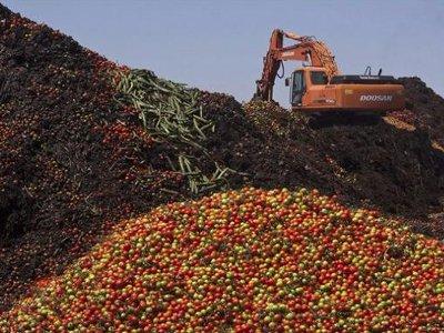 Россельхознадзор под Смоленском уничтожит запрещенные томаты и персики